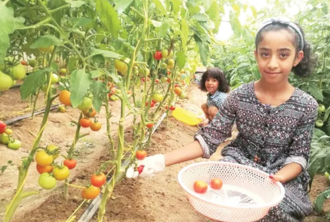 Local farmers give nod to agritourism